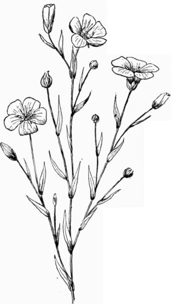 drawing plants and flowers - Pesquisa Google