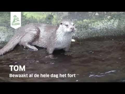 Samenvatting Blijdorp College 'De otter in Nederland'