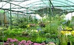 Zahradnictví U KOPŘIVŮ Zahradnictví fotografie 3