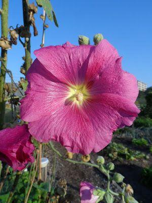 Dorthy's moestuin en meer: septembertuin