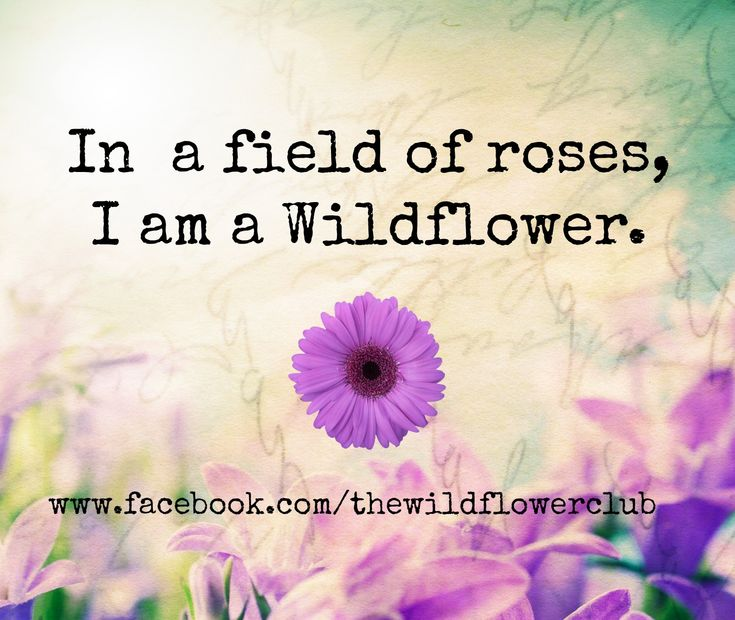 Flower Love Quotes Adorable Best 25 Wild Flower Quotes Ideas On Pinterest  Free Spirit