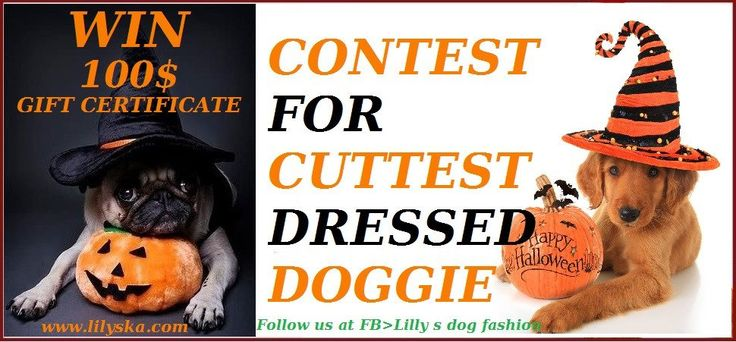 HALLOWEEN DOG FASHION CONTEST