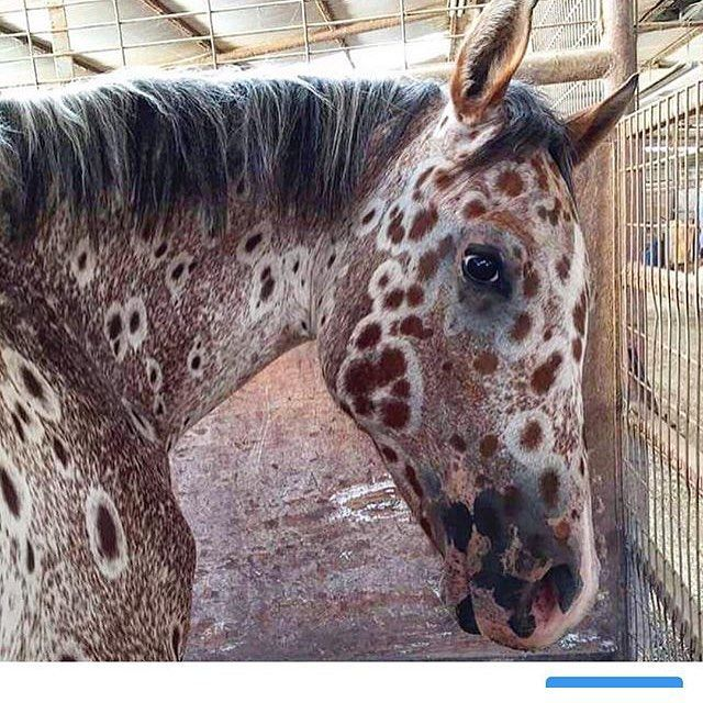24 best horse color galore marbled images on pinterest