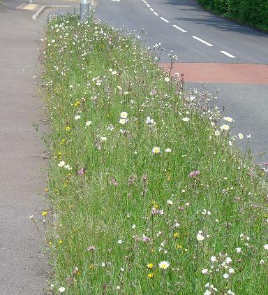 http://wildflowerturfblog.wildflowerturf.co.uk/wp-content/uploads/Essex-verge-Grass-Roof-Company.jpg