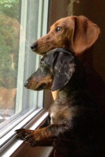 Best 25 Winnie Dogs Ideas On Pinterest Dachshund