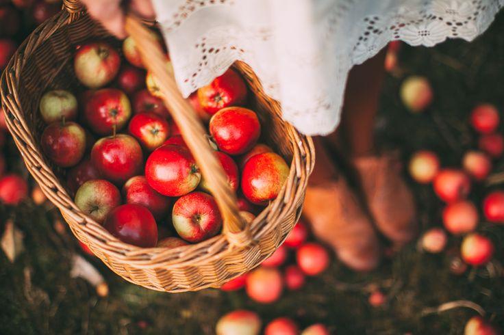 A Clothes Horse: Apple Picking Season