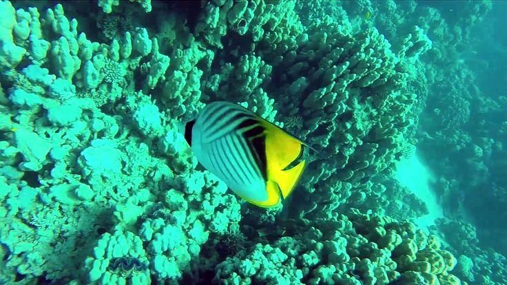 Wadi Lahami Diving 2014