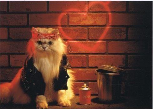 Twin Sisters, Street Artists, Bad Ass, Halloween Costumes, Flower Art, Cat Humor, Bad Kitty, Funny Bones, Kooky Cat