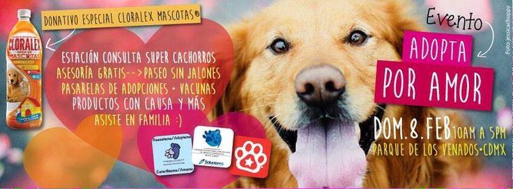 Parque de los venados, evento de @Perrosenlacalle Adopta por Amor dom 7 de Feb