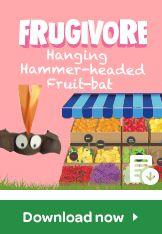 frugivore hanging hammer headed fruit bat
