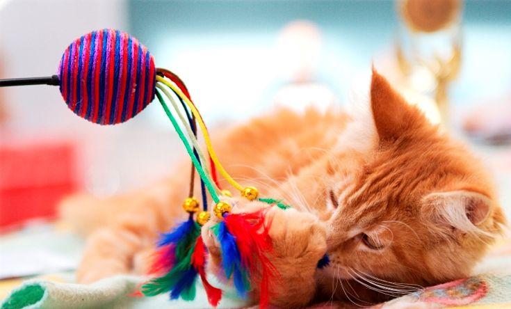 Коты с игрушками фото