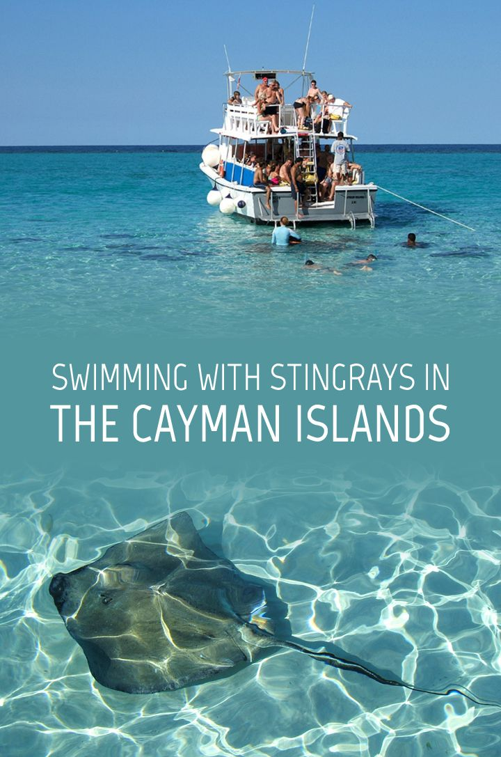 Swimming with stingrays in the clear blue waters of the Caribbean sea off the coast of Grand Cayman in Cayman Islands.