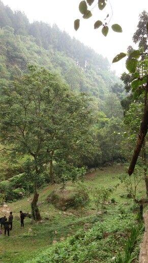 Forest at Curug Nanka