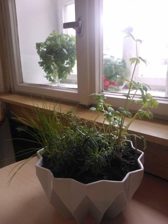 mísa KOB a bylinky #BarboraŠimková #bylinky #květináč #bylinkyvkuchyni #bylinkydoma #kubismus #origami #keramika #porcelán #mísaKOB #mísa #bowl  Barbora Šimková http://barborasimkova.tumblr.com simkova24@gmail.com https://cz.pinterest.com/simkova24/my-works/