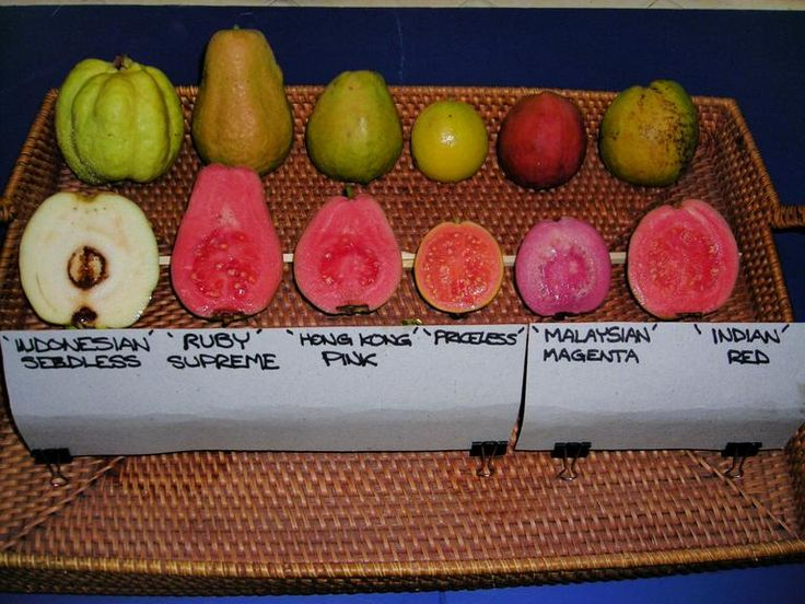 Tropical Guava Fruit Display: Shown here are all different kinds of guava fruit. I've eaten most of these types but there are still a few I haven't tried. I prefer almost any other type of pink/red variety to the green Indonesian seedless kind, which are crunchy instead of soft and luscious.