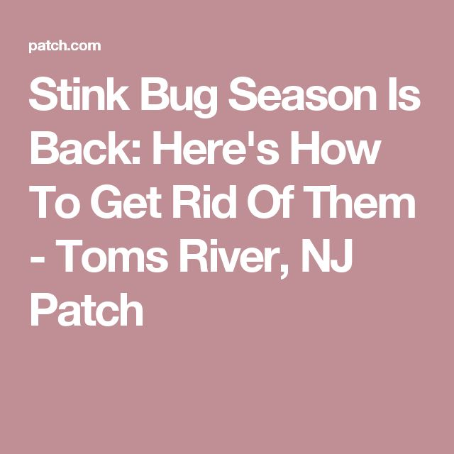 Stink Bug Season Is Back: Here's How To Get Rid Of Them - Toms River, NJ Patch