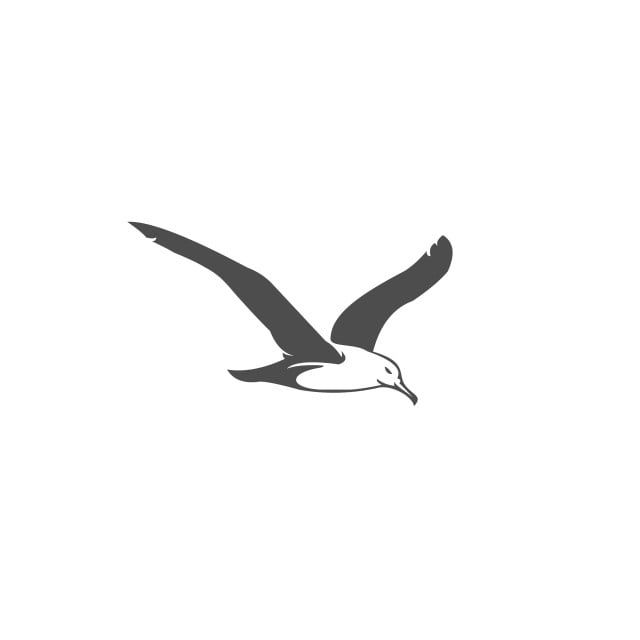 Seagull Vector Illustration For Your Company Or Brand Above Abstract Action Png And Vector With Transparent Background For Free Download Seagull Tattoo Seagull Illustration Illustration