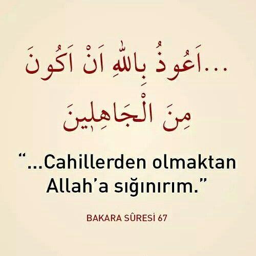Cahillerden olmaktan Allah'a sığınırım. [Bakara Sûresi 67]  #cahil #Allah #sığın #bakarasuresi #ayet #ayetler #türkiye #islam #dua #amin #istanbul #Rize #ilmisuffa