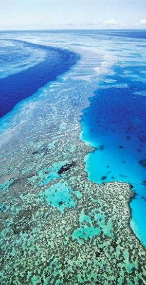 * Coral. Great Barrier Reef, Queensland Australia
