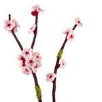 blossom twig knitting pattern
