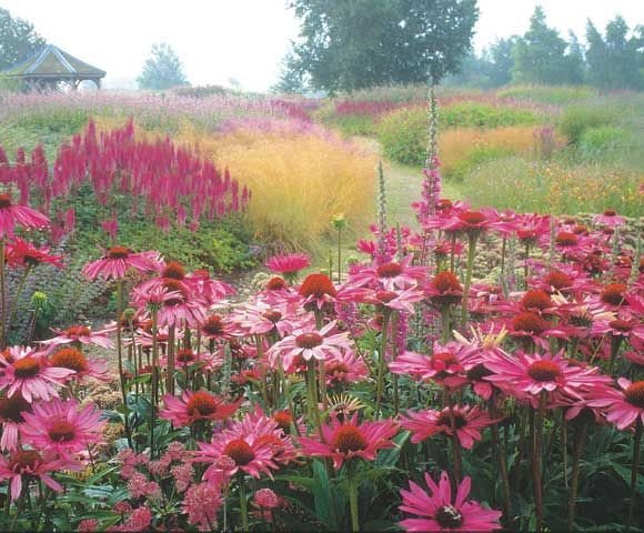 75 best images about piet oudolf james van sweden for Piet oudolf planting schemes
