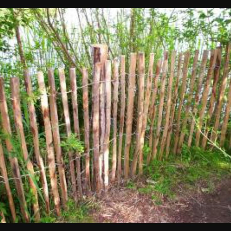 wood snow fence for backyard! dogs are small enough that a thick barricade is unnecessary, and a roll of this fencing (4 feet high) is 50 feet long for only $39! just two rolls will be sufficient!!!!