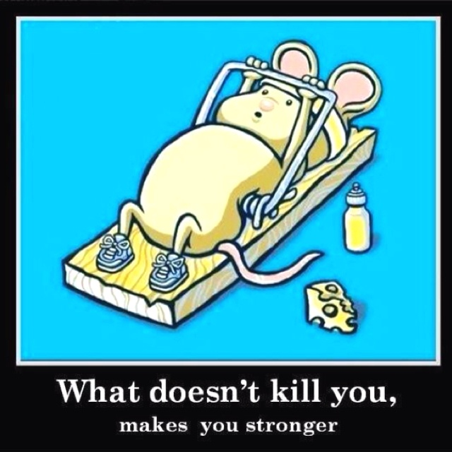 Mice, Fit, Quotes, Motivation, Kill, Too Funny, So True, Humor, So Funny