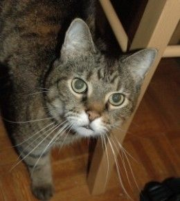Most people adopt their cats from a shelter or buy a kitten at a pet store. Some even find their cats in the classified section of the newspaper or maybe on Craigslist. Occassionally, people have to get rid of their cats for personal reasons and...