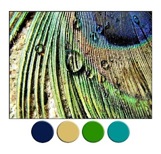 IN LOVE WITH THIS: Peacock Feathers, Waterdrop, Color Schemes, Mothers Nature, Peacock Colors, Water Droplets, Peacocks Feathers, Peacocks Color, Colour Schemes