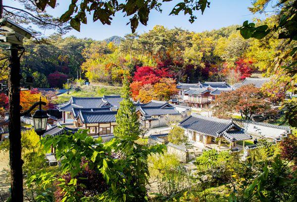 도산서원 단풍(2013. 11. 5)
