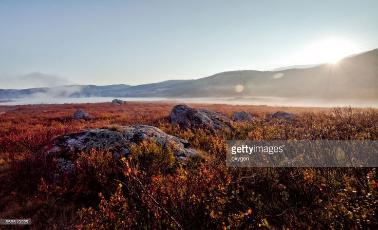 Morning Sunrise with Fog in the vicinity of the mountain and lake pass Ulaganskiy, surrounded by autumn red dwarf birches. Altai, Russia  by Oksana Ariskina on @gettyimages. #OksanaAriskina #Photography #Nature #Altai #Mountain #Russia #Ulagan #gettyimages #gettyimagescreative  #gettyimagesnew #Altay