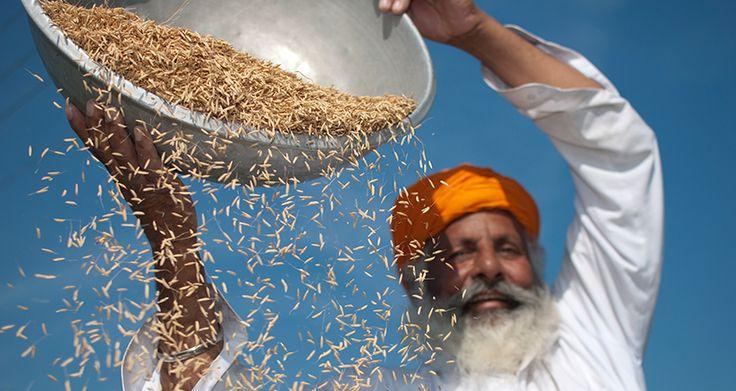 Fairtrade-Reis Produzent