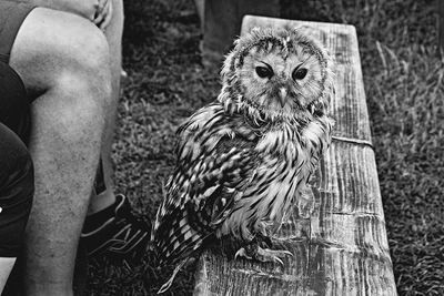 bwstock.photography - photo | free download black and white photos  //  #owl