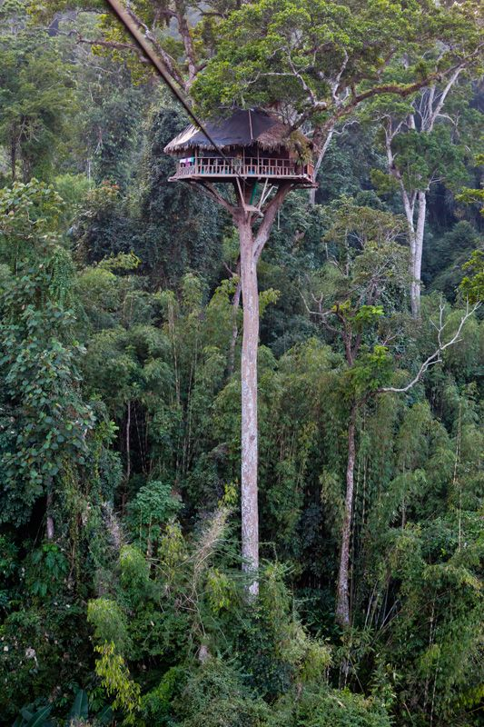 Tree Houses & Zip Lines form the basis of the Gibbon Experience, an eco-tourism project in Laos http://www.gibbonexperience.org   http://www.ecotourismlaos.com/activities/gibbon_trk.htm