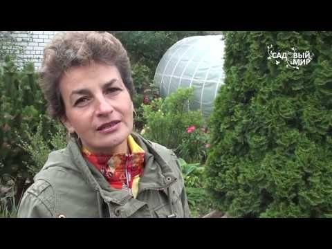 """Дизайн для маленького сада. Сайт """"Садовый мир"""" - YouTube"""