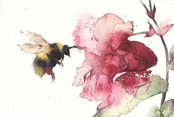 Kate Osborne, Bee with Balsam.   Watercolour, 16 x 16cm