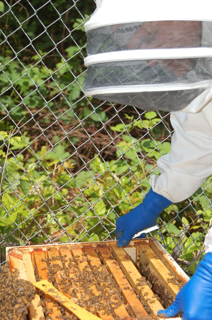 team of happy male and female beekeepers standing at apiary stock
