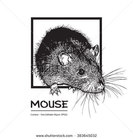 Mouse, Rat. Black And White Vector Illustration.