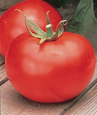 Better Boy Hybrid Tomato Seeds and Plants, Vegetable Gardening at Burpee.com