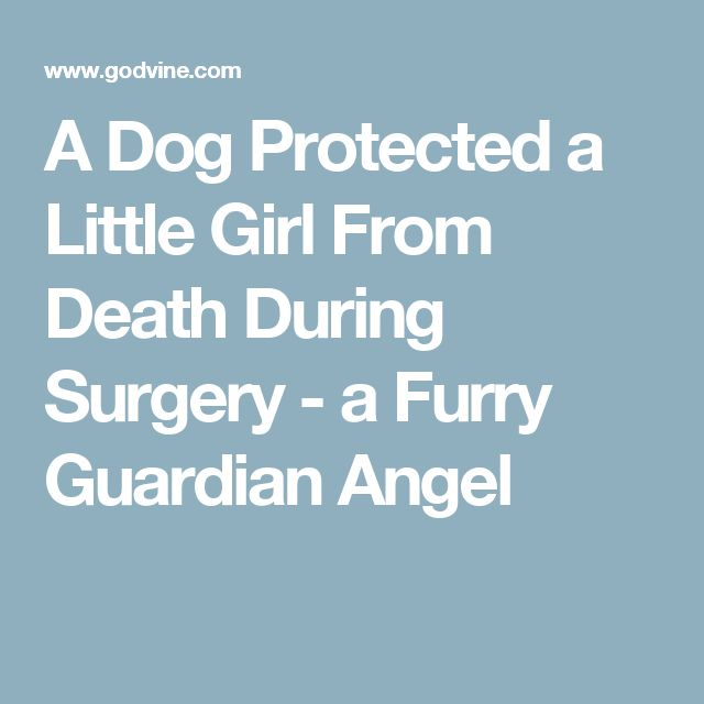A Dog Protected a Little Girl From Death During Surgery - a Furry Guardian Angel
