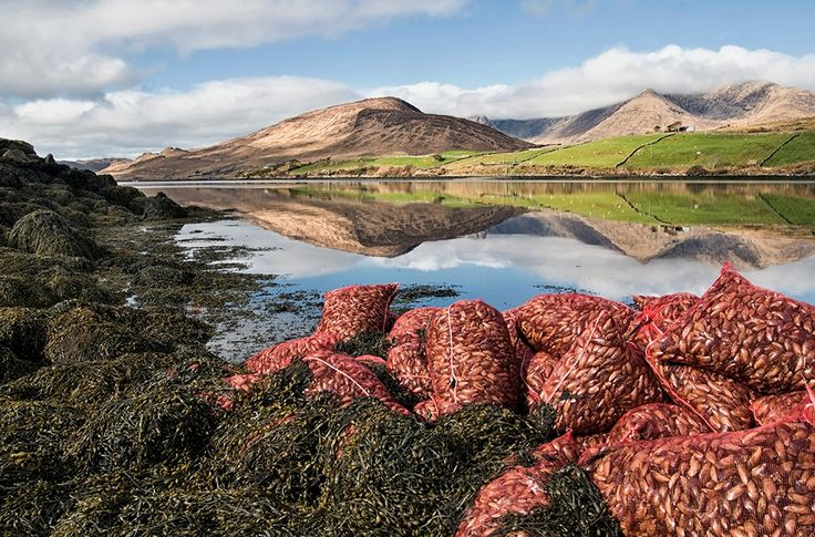 Mussel Bags, Killary Fjord by Aoife Herriott on ArtClick.ie Photos of Ireland