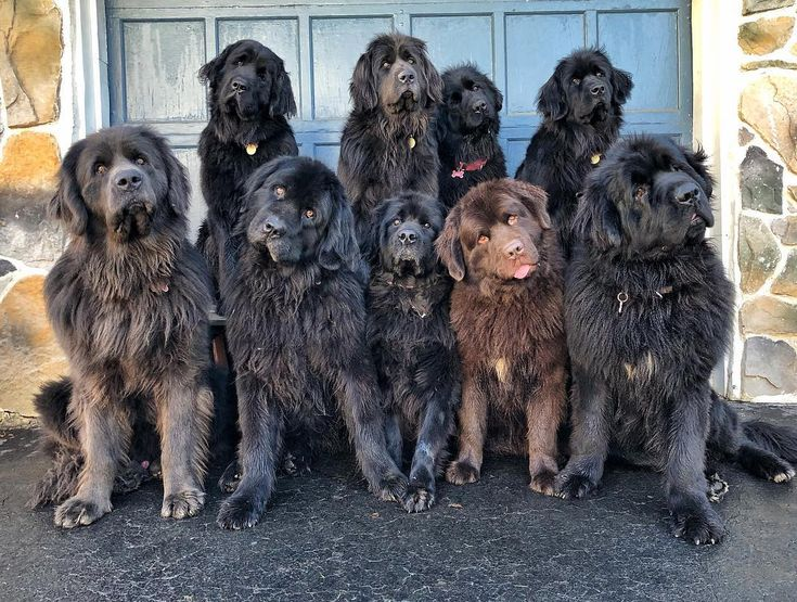 Pennsylvania dog mom has a house filled with 9 fluffy