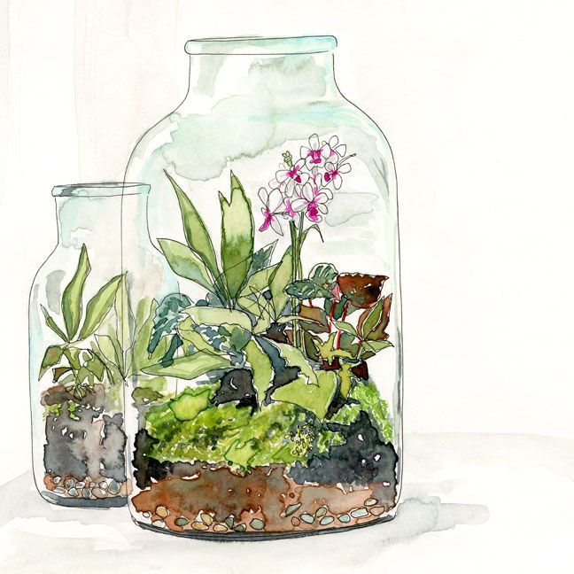 terrarium no 3 illustration lindsay gardner hva illustration pinterest jardins. Black Bedroom Furniture Sets. Home Design Ideas