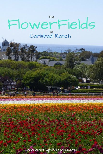 The Flower Fields at Carlsbad Ranch, San Diego CA