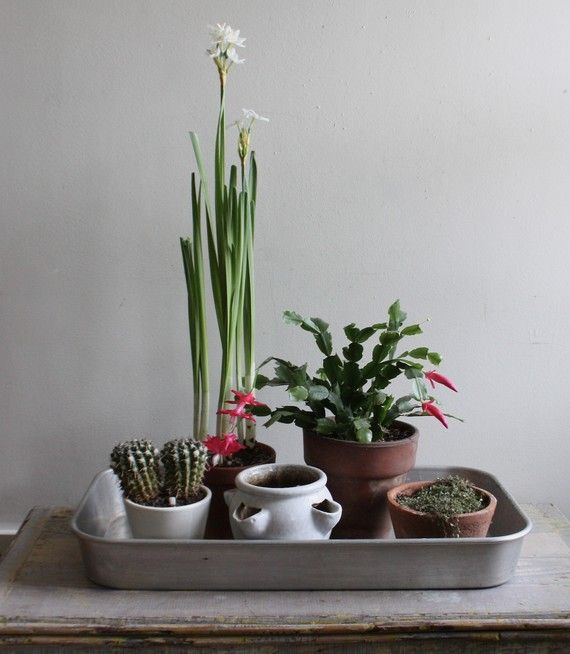 A vintage roasting pan is a smart way to corral a group of potted plants.