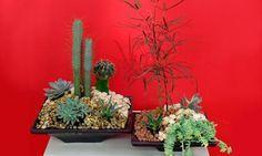 Centro de mesa con plantas crasas. Os proponemos un centro original, decorativo y muy resistente para nuestra mesa del salón con plantas crasas o suculentas.