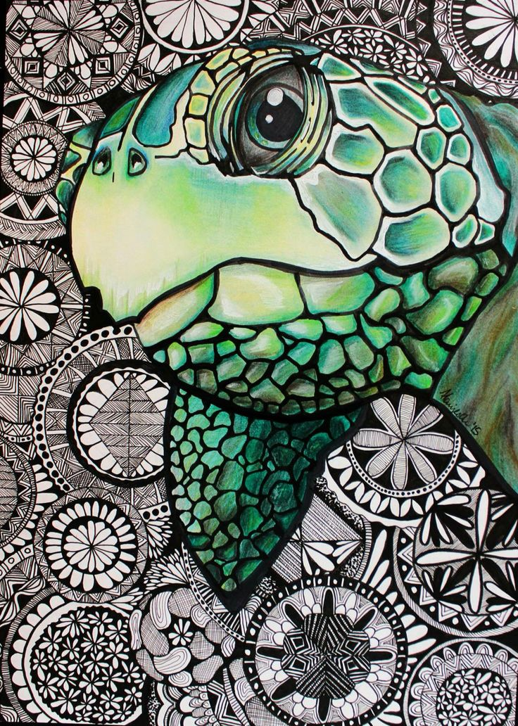 Sea turtle                                                                                                                                                      More