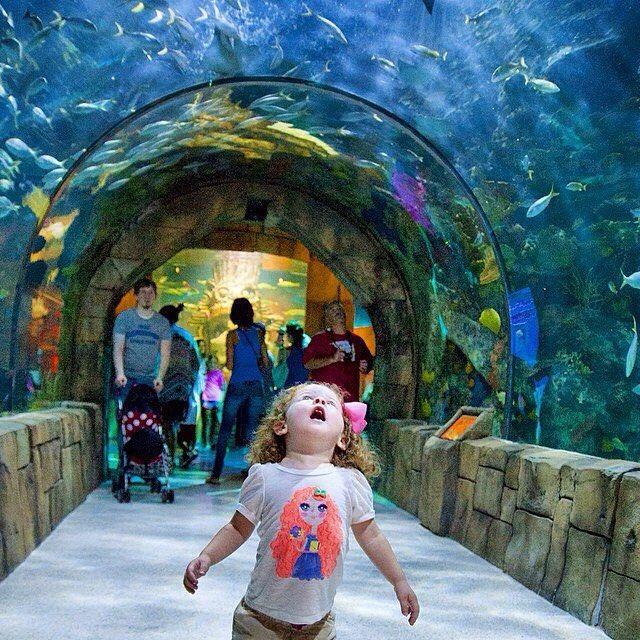 Rain Or Shine The Audubon Aquarium Of The Americas Is A