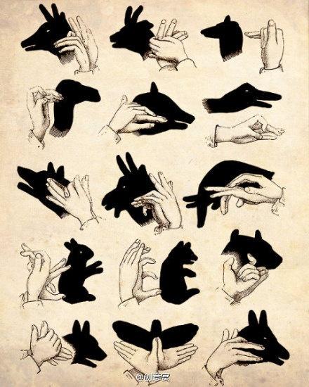 Fun animal shadows.