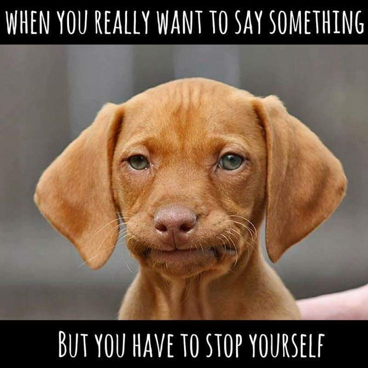 So true. This puppy is just adorable.